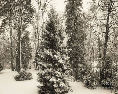 Photograph - Winter Zauber 02 by Edmund Nagele