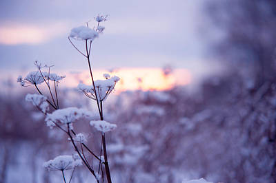 Photograph - Winter Zen by Jenny Rainbow