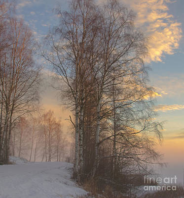 Photograph - Winterday by Sylvia  Niklasson
