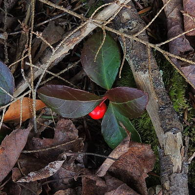 Wintergreen Art Print