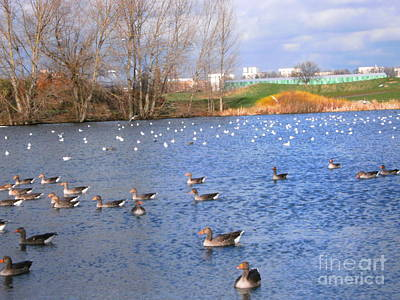 Art Print featuring the photograph Wintering Birds - Mayesbrook Park by Mudiama Kammoh