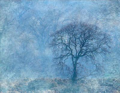 Mighty Oak Photograph - Wintering Oak by Angie Vogel