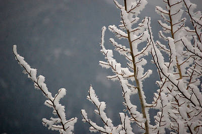 Photograph - Winter's Arrival by Sherlyn Morefield Gregg