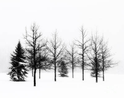 Photograph - Winter's Bareness II by Lori Dobbs