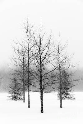 Winter's Bareness  Art Print