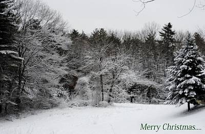 Photograph - Winter's Best by Tricia Marchlik