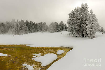 Photograph - Winter's Contrast - Yellowstone National Park by Sandra Bronstein
