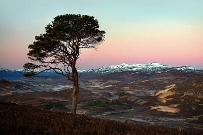 Photograph - Winter's Dawn by Macrae Images