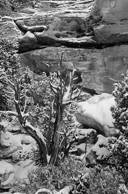 Pinion Photograph - Winters Dead Utah Juniper Days Past by Eric Rundle