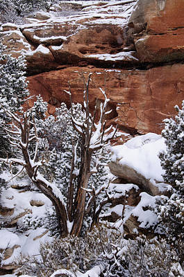 Photograph - Winters Dead Utah Juniper  by Eric Rundle