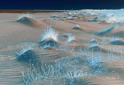 Winters Dunes II Original by Suzanne Gaff