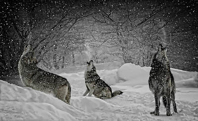 Photograph - Winters Eve Howling by Wes and Dotty Weber