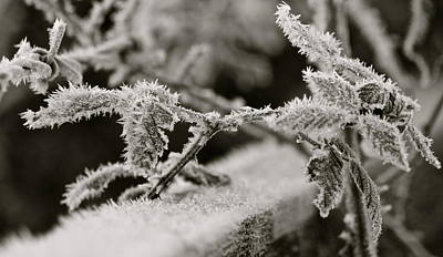 Photograph - Winters Frost by Karen Grist