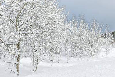 Photograph - Winter's Glory - Grand Tetons by Sandra Bronstein
