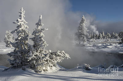 Winter's Glory - Yellowstone National Park Art Print by Sandra Bronstein