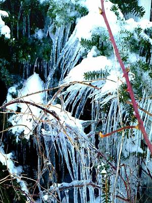 Photograph - Winter's Icy Jungle 1 by Marianne Dow