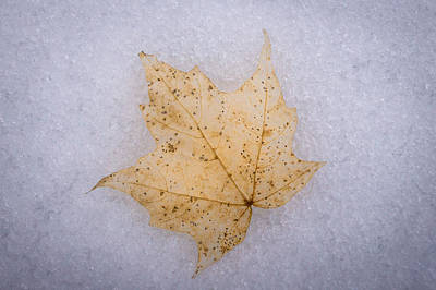 Photograph - Winter's Leaf by Bill Pevlor