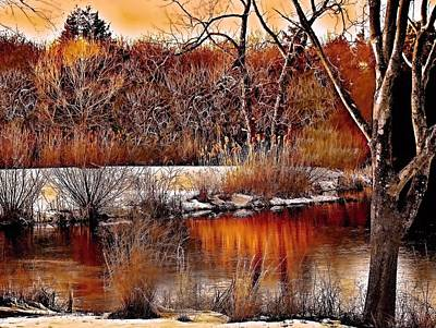 Golden Trout Photograph - Winters Light by Rick Todaro
