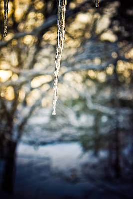 Photograph - Winter's Light by Sara Frank
