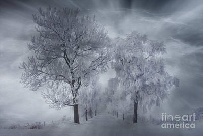 Country Snow Photograph - Winter's Magic by Veikko Suikkanen