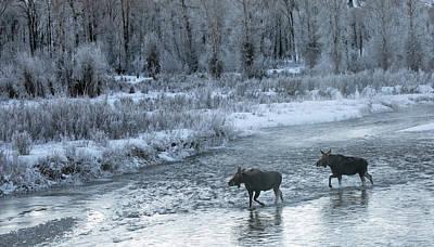 Gros Ventre Photograph - Winter's Majesty by Sandy Sisti