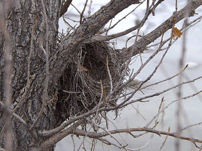 Photograph - Winter's Nest by Michelle Wolff