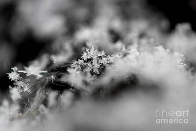 Photograph - Winter's Peace by Stacey Zimmerman