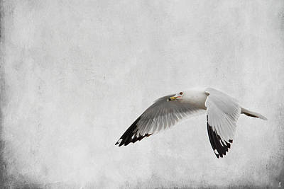 Flying Gull Photograph - Winter's Return - Wildlife - Seagull by Jai Johnson