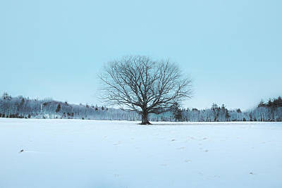 Photograph - Winters Silence by Robert Clifford