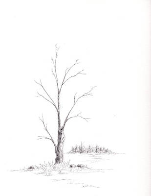 Drawing - Winter's Tree by Steven Powers SMP