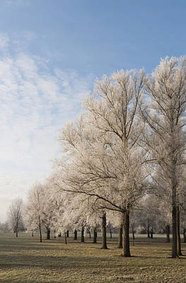 Art Print featuring the photograph Winter's Trees by David Isaacson