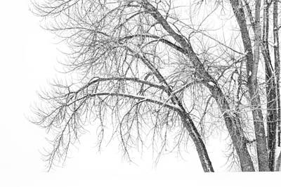 Bare Trees Photograph - Winter's Weight by Darren  White