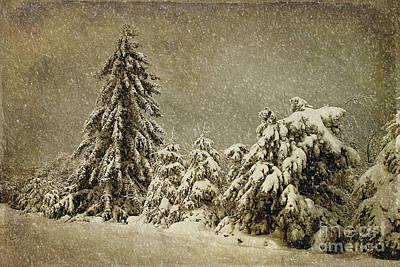 Trees In Snow Photograph - Winter's Wrath by Lois Bryan