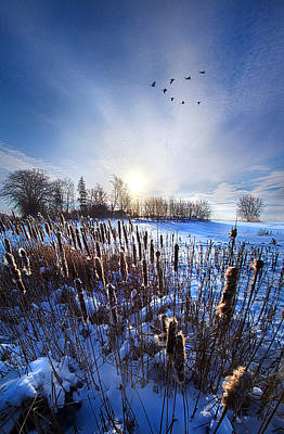 Flight Formation Photograph - Wintertails by Phil Koch