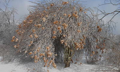 Photograph - Wintertime Snowball Bush Tree by Diannah Lynch