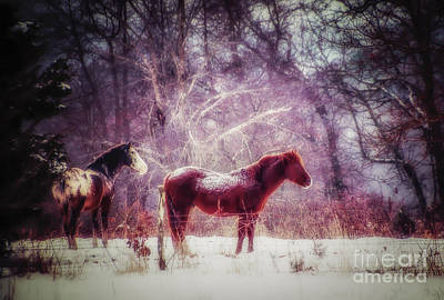 Photograph - Wintery Dreams by Julie Clements