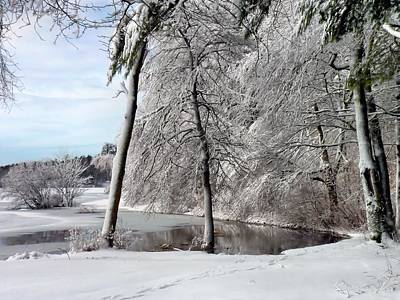Photograph - Wintery Mix by Janice Drew