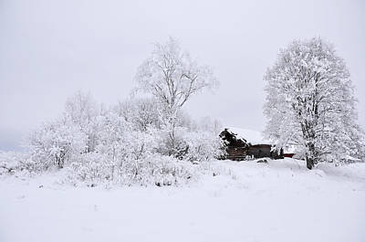 Wintry Landscape Art Print by Conny Sjostrom