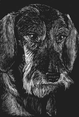 Dog Portrait Drawing - Wire Haired Dachshund by Rachel Hames