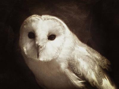 Owl Mixed Media - Wisdom Of An Owl by Georgiana Romanovna