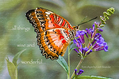 Photograph - Wise And Wonderful by Karen Stephenson