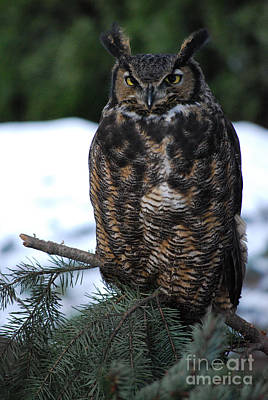 Art Print featuring the photograph Wise Old Owl by Sharon Elliott