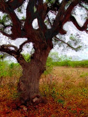 Da214 Wise Old Tree By Daniel Adams Art Print