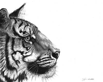 Tiger Drawing - Wise One by J Ferwerda