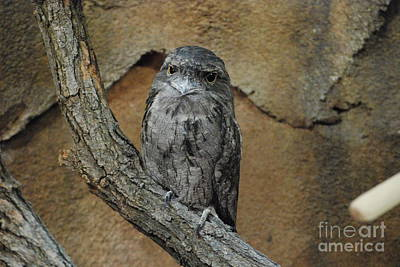 Photograph - Wise Owl by Mark McReynolds