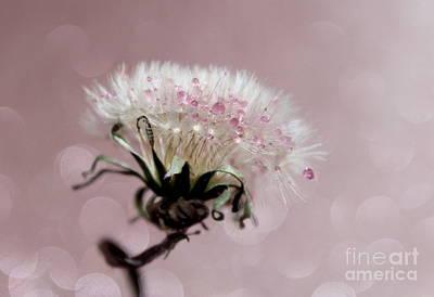 Wish In Pink Art Print