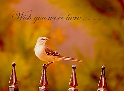 Mockingbird Digital Art - Wish You Were Here.. by Angelika Sauer