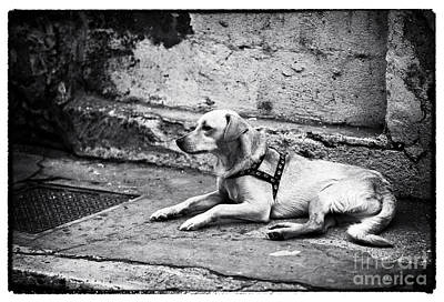 Perros Photograph - Wishing For A Friend by John Rizzuto