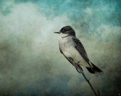 Kingbird Photograph - Wishing by Jai Johnson