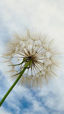 Wish List Photograph - Wishing  by Art Dingo